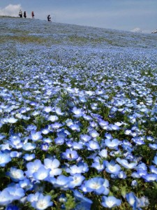 Linda Bell Hitachi Seaside Park